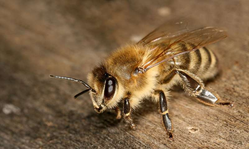 Honeybees more likely to regulate hive's 'thermostat' during rapid temperature increases