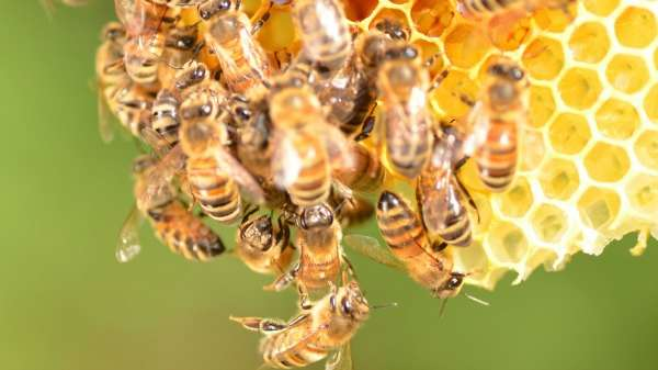 Honey certification project sets industry abuzz