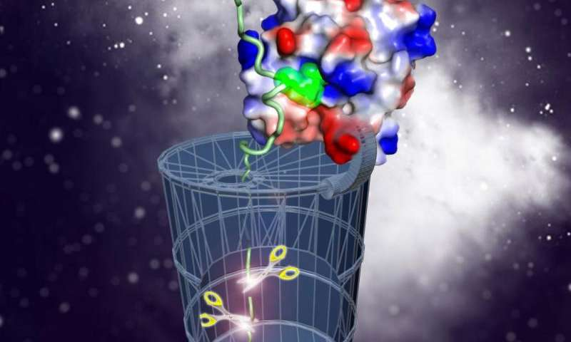 How cells take out the trash—phosphoarginine deciphered