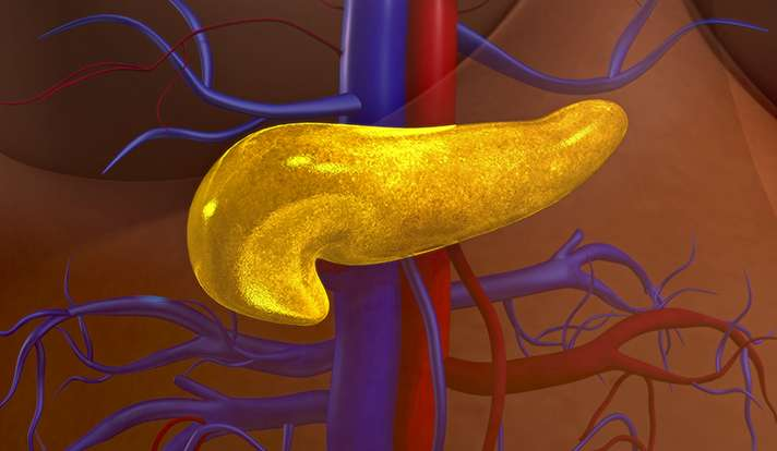 How gut microbes may trigger type 1 diabetes