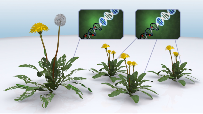 Identifying plant and animal DNA switches much faster and cheaper