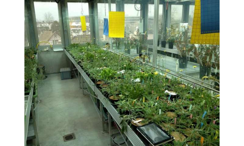 Cosecha mejorada para pequeñas explotaciones gracias a cultivos clonados naturalmente