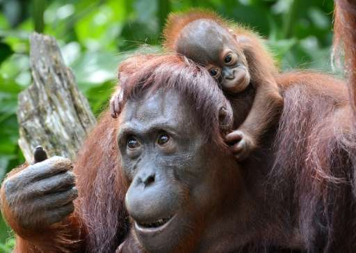 "In an update to its ""Red List"" of threatened species, the International Union for the Conservation of Nature said grow"
