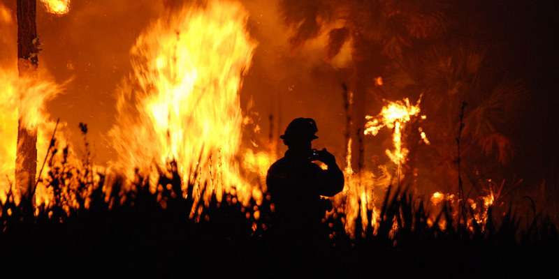 Insect outbreaks reduce wildfire severity
