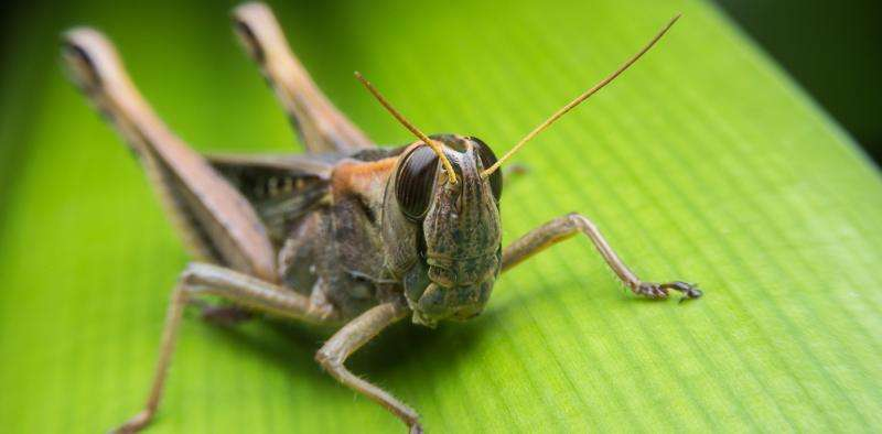 Insects are helping us develop the future of hearing aids