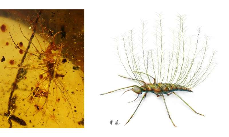 Insects were already using camouflage 100 million years ago