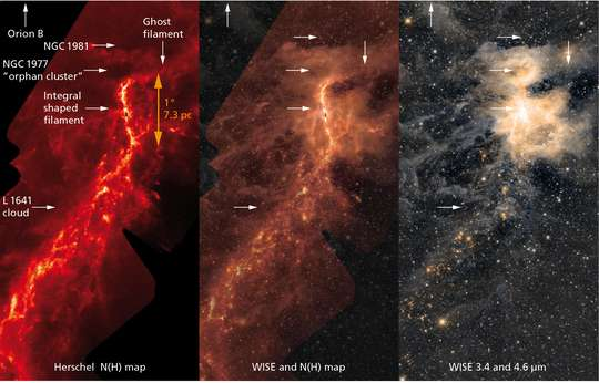 Interplay of magnetic fields and gravitation in the Orion Nebula leads to star development