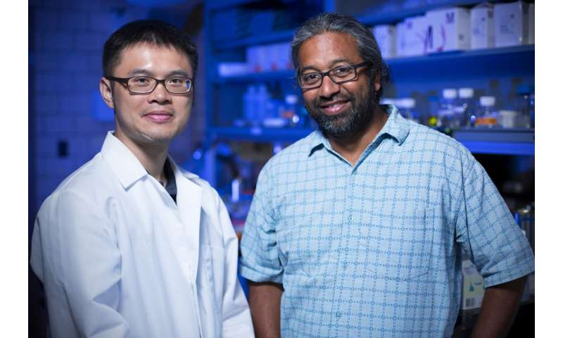 Iowa State researchers describe copper-induced misfolding of prion proteins