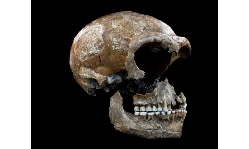 Isotope studies shed a new light on the eating habits of Neanderthals