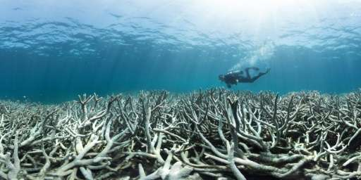 It is the third time in 18 years that the Great Barrier Reef, which teems with marine life, has experienced mass bleaching after