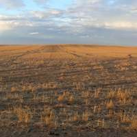 Lack of copper in ancient soil regulates nitrification