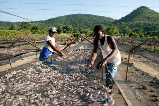 Lake Kariba on the Zambezi River border between Zimbabwe and Zambia used to be dotted with hundreds of commercial fishing rigs b