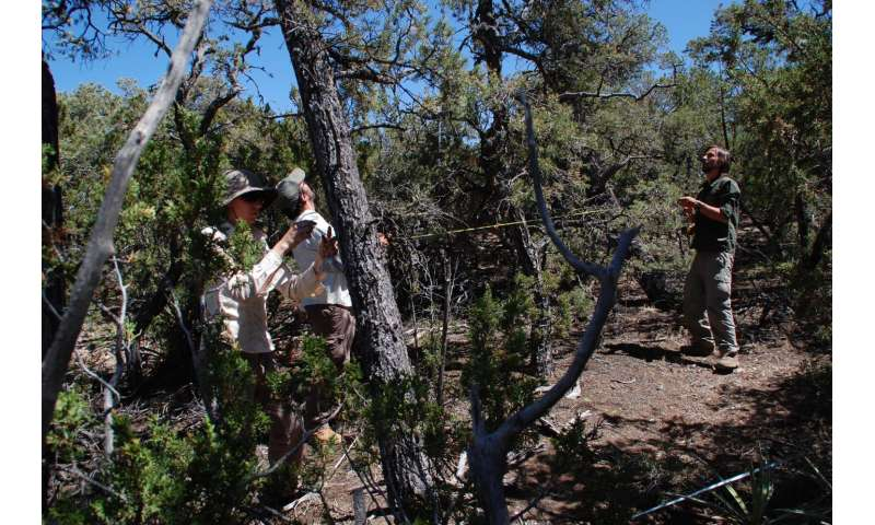 Large forest die-offs can have effects that ricochet to distant ecosystems