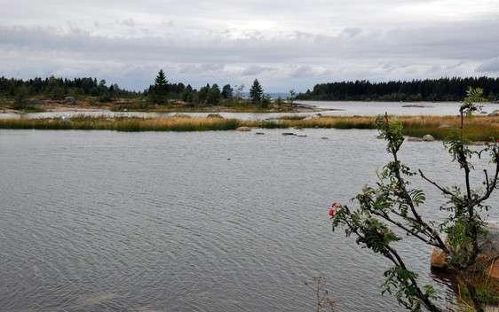 Less fish in the future Baltic Sea