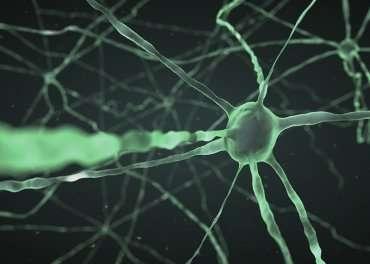 Long-sought 'warm-sensitive' brain cells identified in new study