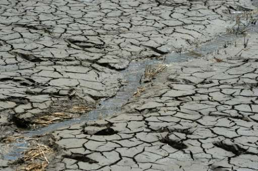 Malawi has declared a national disaster due to food shortages caused by drought