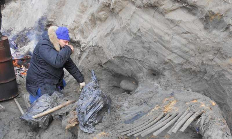 Mammoth injuries indicate humans occupied Arctic earlier than thought
