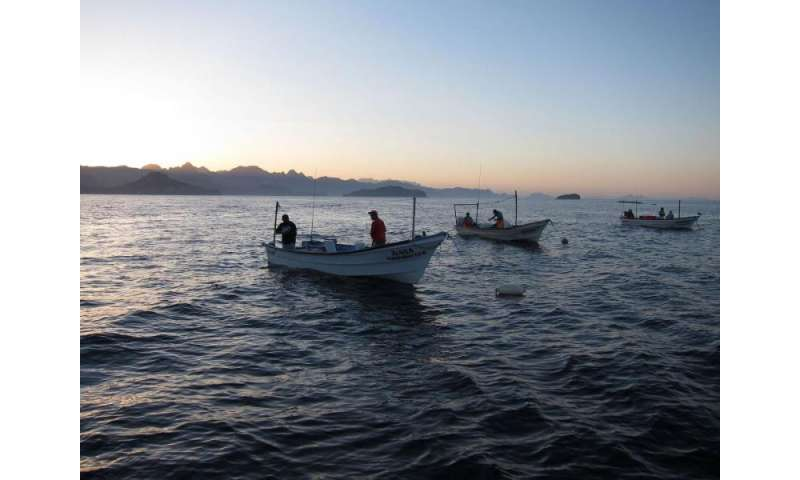 Marine protected areas intensify both cooperation and competition