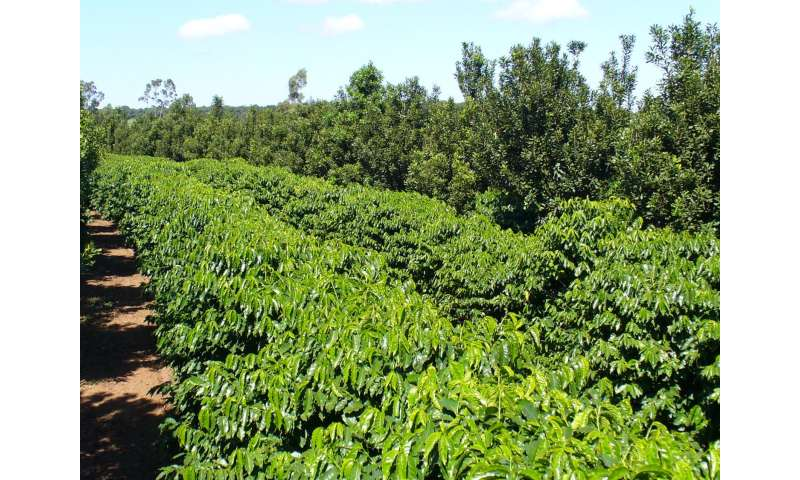 Matchmaking For Coffee Intercropping Plants