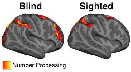 Math study shows our brains are far more adaptable than we know