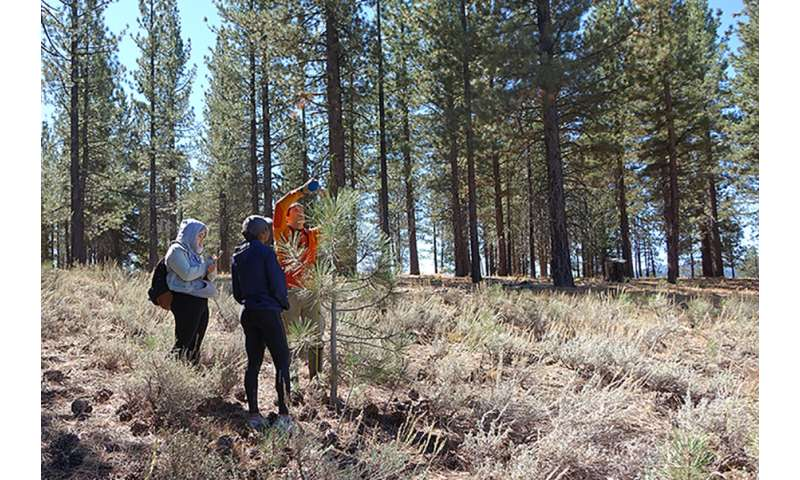 Meadow restoration studied for potential to build carbon credits in California
