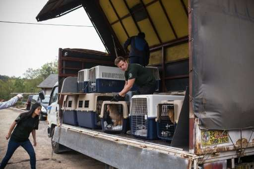 Members of Humane Society International load dogs onto a truck during an operation to shut down a dog meat farm in Wonju