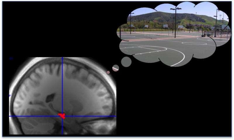 Memory replay prioritizes high-reward memories