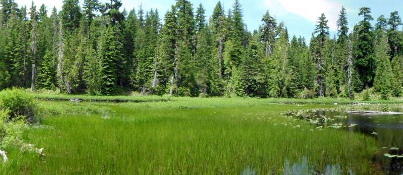 Mercury contamination prevalent in western North America