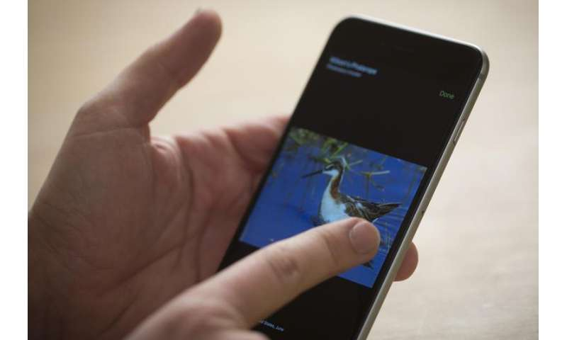 Merlin Bird Photo ID mobile app launches