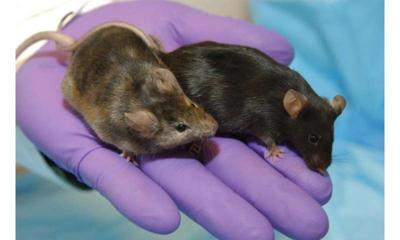 Mice studies in space offer clues on bone loss