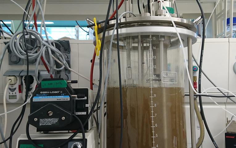 Microbe hunters discover iron-munching microbe