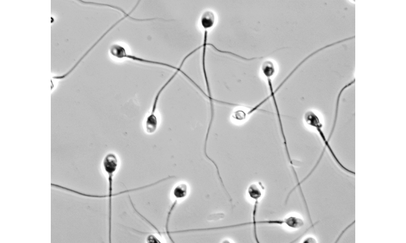 Milestone reached on path to new form of male contraception