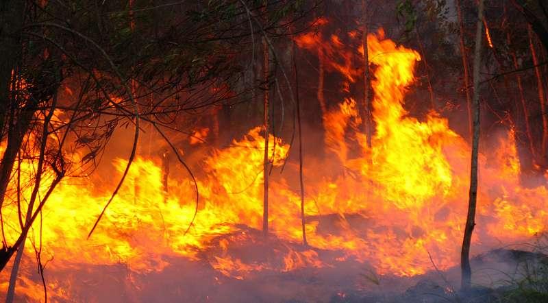 Modeling could predict future bushfire danger