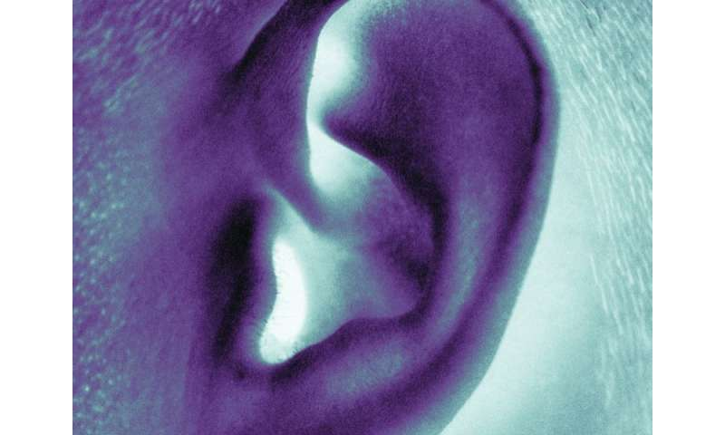 Modular component assembly feasible for ear reconstruction