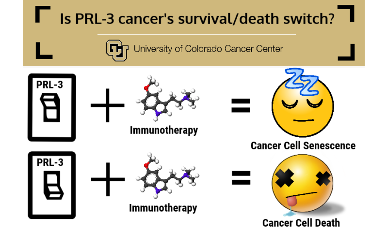 Molecular switch may sensitize triple-negative breast cancers to immunotherapy