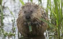 More than one in 10 UK species threatened with extinction, new study finds