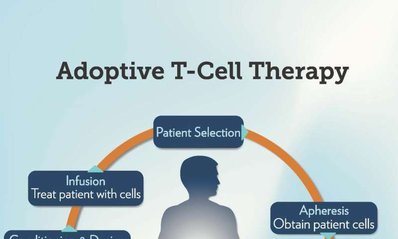 N-acetyl cysteine improves efficacy of adoptive T cell immunotherapy for melanoma