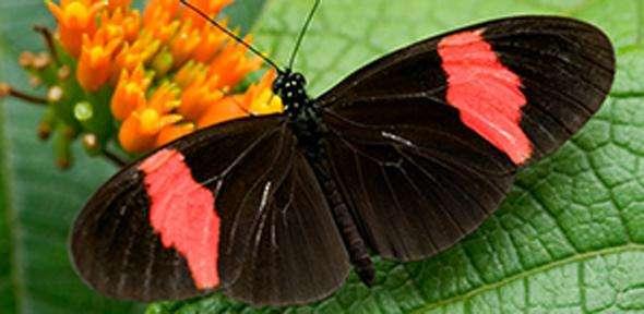 Natural selection sculpts genetic information to limit diversity