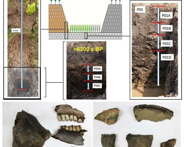 Neolithic paddy soil reveals the impacts of agriculture on microbial diversity