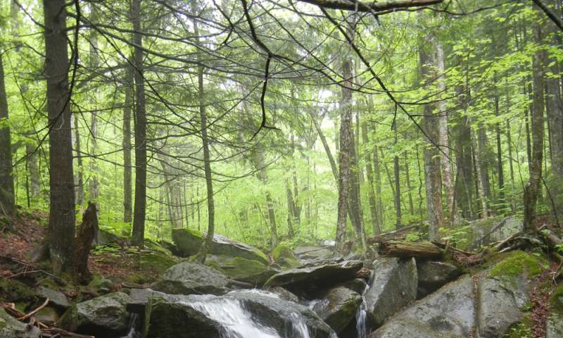 Neutralizing acidic forest soils boosts tree growth, causes spike in nitrogen export