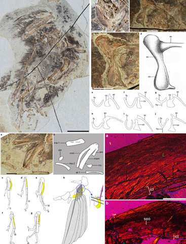 New basal bird from China reveals the morphological diversity in early birds