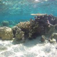 New coral reef research targets information gap