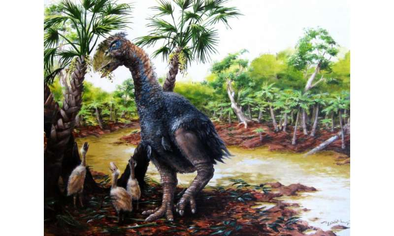 New CU study confirms giant flightless bird wandered the Arctic 50 million years ago