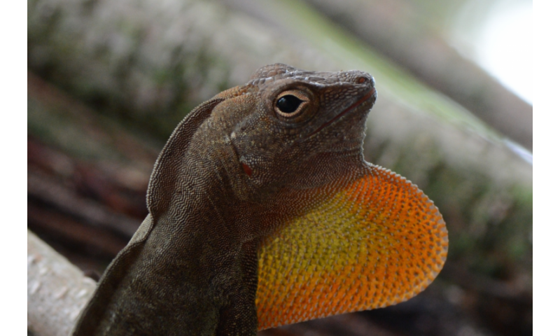 New framework sheds light on how, not if, climate change affects cold-blooded animals