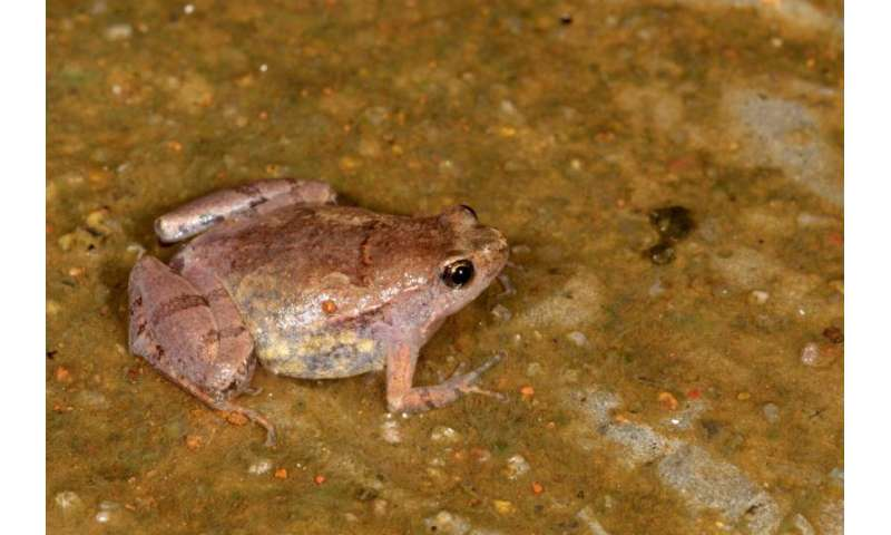 New frog species discovered in India's wastelands