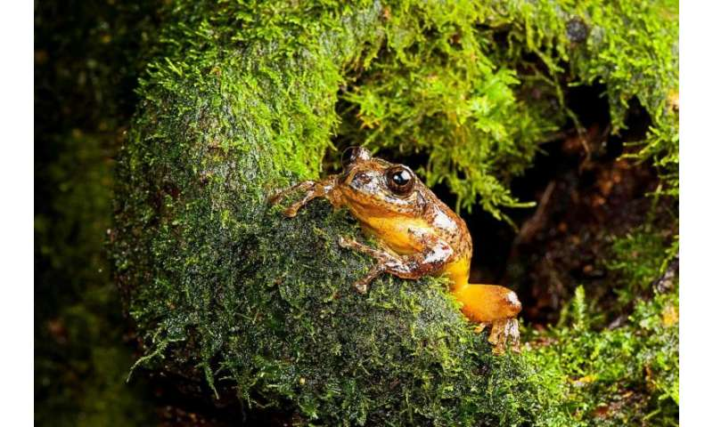 New genus of tree hole breeding frogs found in India