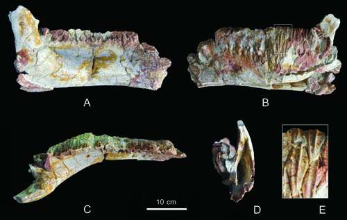 New hadrosauroid dinosaur found from the late Cretaceous of Shanxi, China