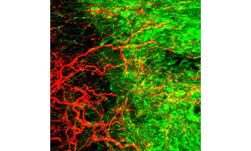 New hope for spinal cord injuries