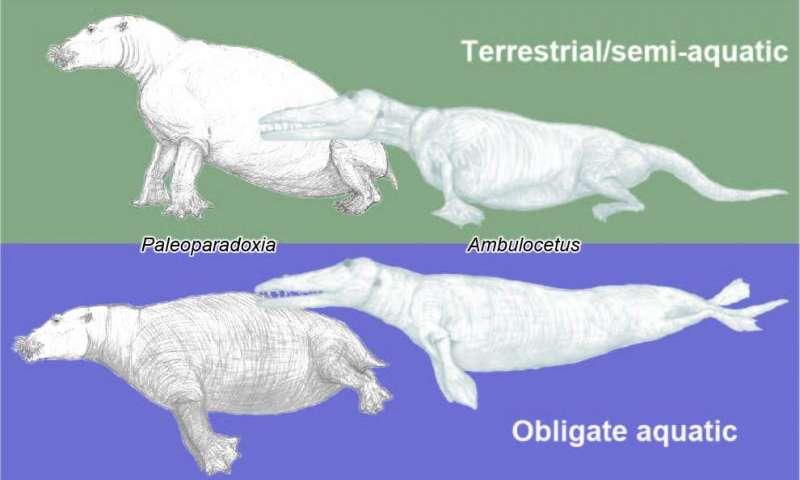 New index reveals likelihood of terrestrial or aquatic lifestyles of extinct mammals