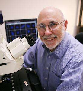 New method detects telomere length for research into cancer, aging